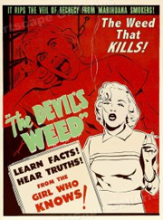 The DEVILS WEED