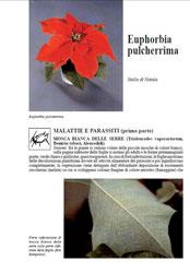Scheda di coltivazione Euphorbia pulcherrima