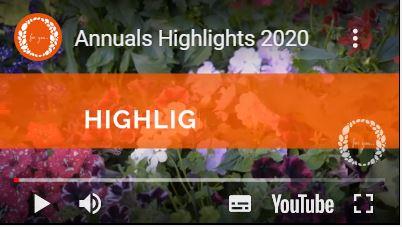 Principali novità tra le Annuali Dümmen Orange 2020