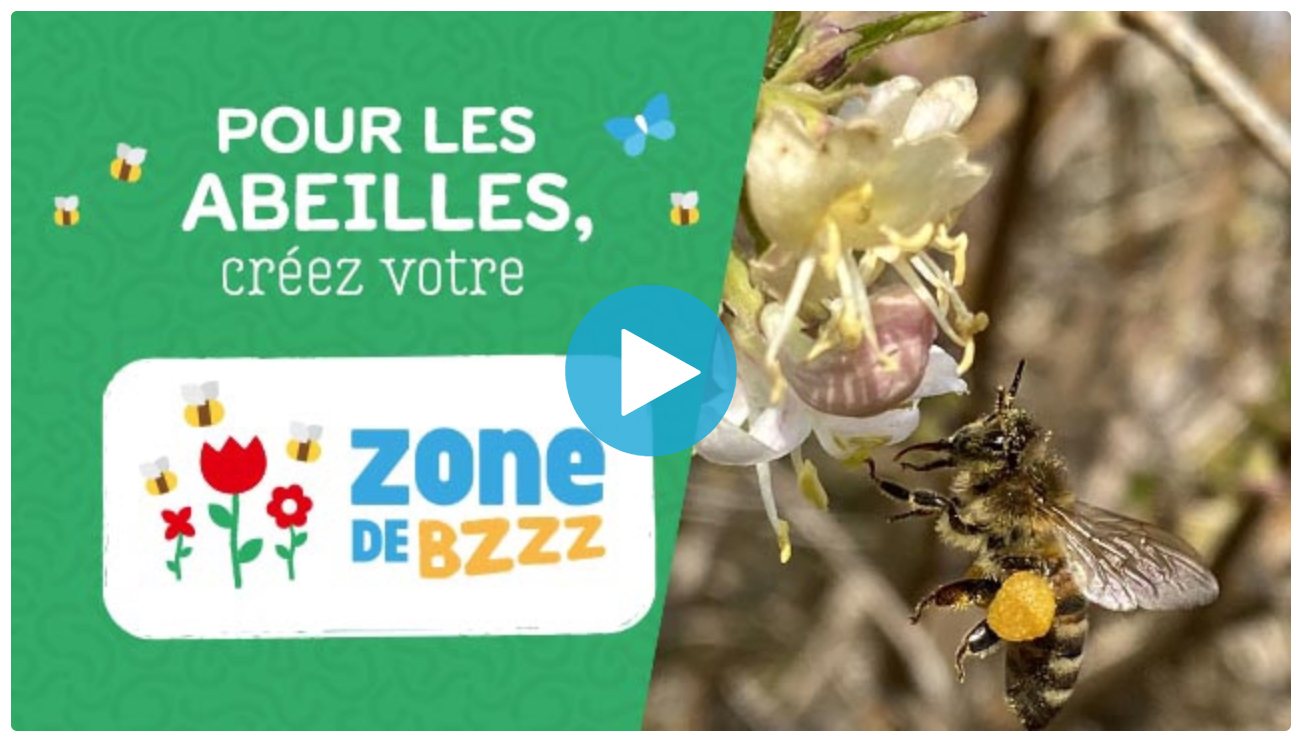Pour les abeilles, semons des graines mellifères