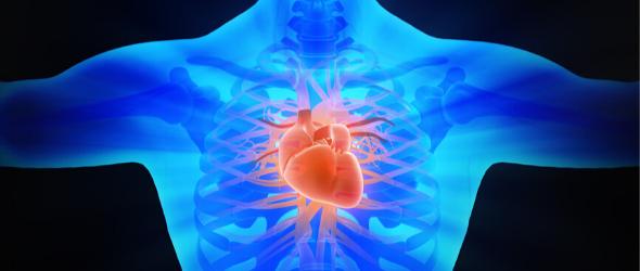 The Circulatory System Lesson - Gynzy
