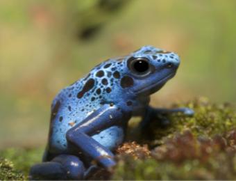 Animals of the Rainforest - Gynzy