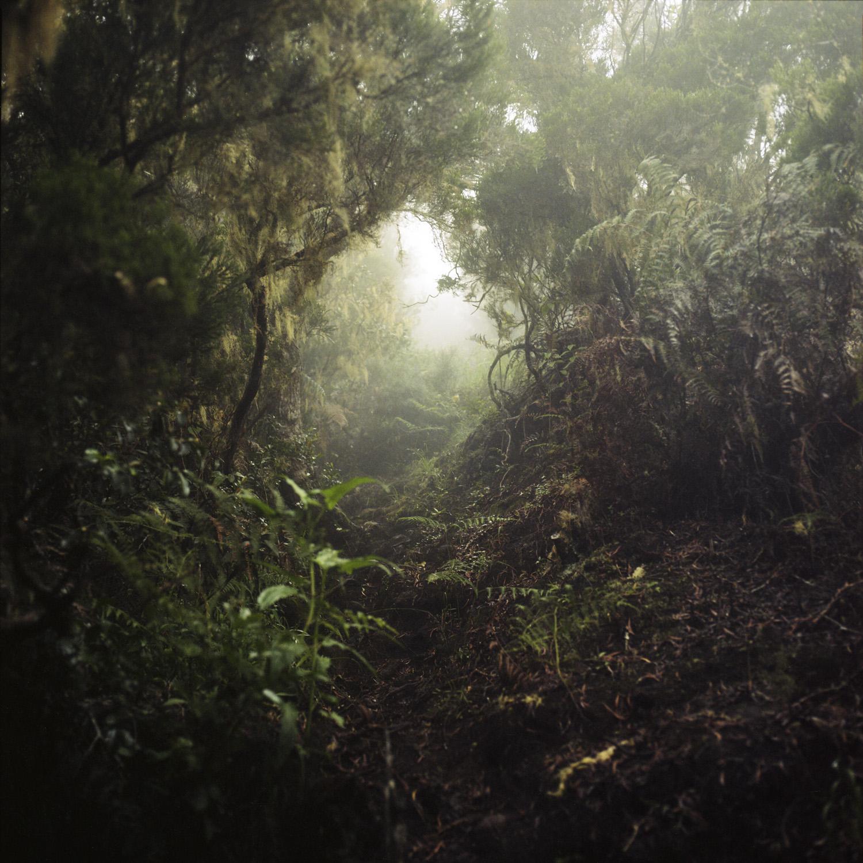 Julien Coquentin, Tropiques, 2020 © Julien Coquentin