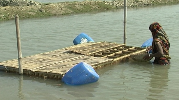 Hardening crabs in floating cages