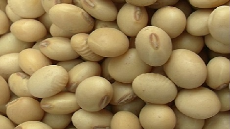 Harvesting and storing soya bean seed