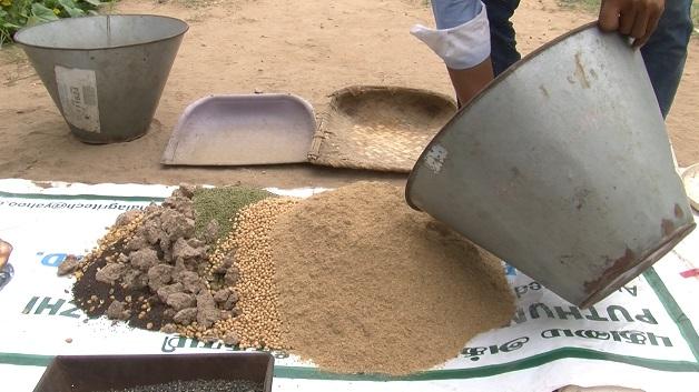 Managing rust diseases in wheat and barley
